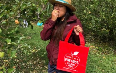 Apple Picking in Bilpin